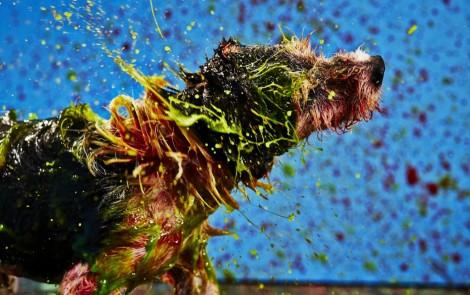 Canismo, perros artistas que buscan visibilidad y apoyo